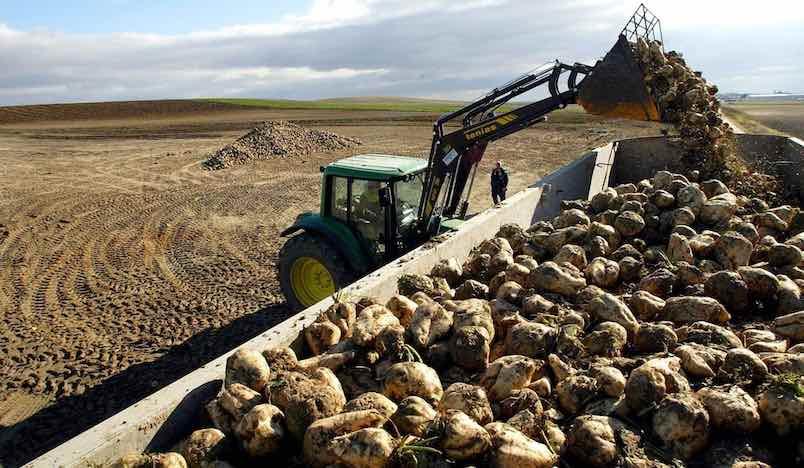Cómo aplicar los tratamientos herbicidas en el cultivo de remolacha azucarera