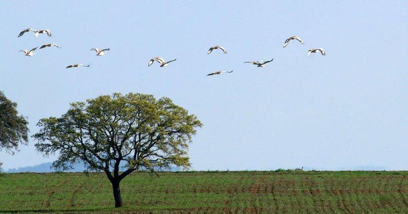 Agricultura de Conservación: un arma contra el cambio climático
