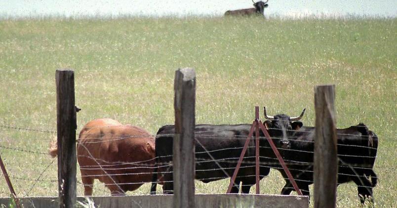 Hacia un manejo digital de la ganadería extensiva