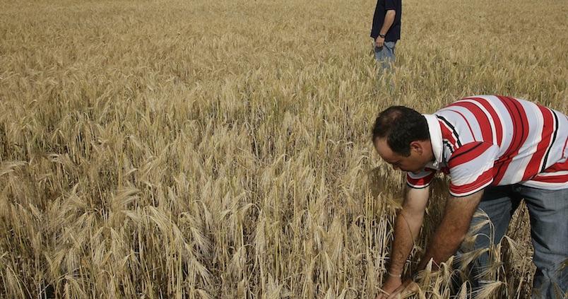 Bajan los precios mayoristas de los cereales