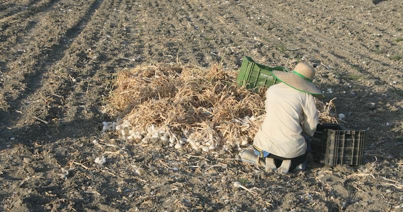 Estado de alarma: ¿Debe acreditar un agricultor que se dirige a su trabajo?