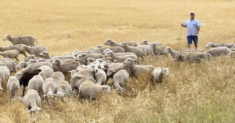 Agricultura concederá ayudas por valor de 40 millones de euros a más de 1.000 ganaderos