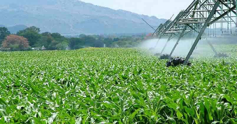 Agricultura defiende el uso de aguas regeneradas para lograr un regadío eficiente