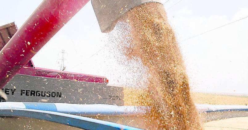 ¿En qué situación se encuentran los cereales de invierno?