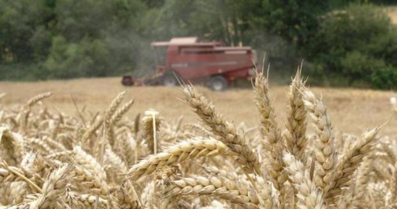recoleccion-trigo-duro