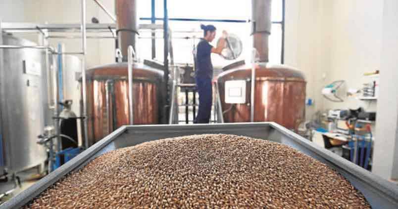 fabricacion-cebada-cerveza