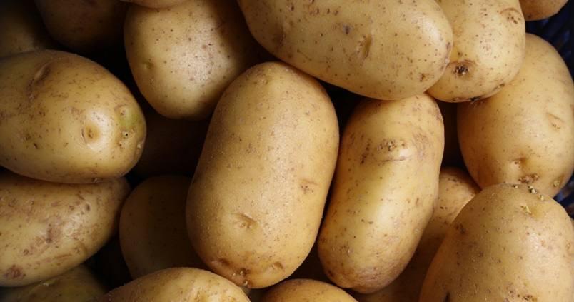 Aprende a identificar las principales plagas que afectan a la patata andaluza