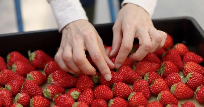 «Riego Berry»: la nueva app de recomendaciones para el cultivo de frutos rojos