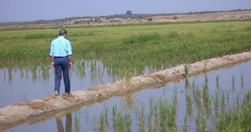 arrozales-sevillanos-recurso