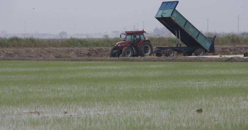 cosecha-arroz-recurso3