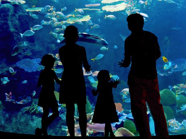 Planes culturales para disfrutar con los niños en Sevilla