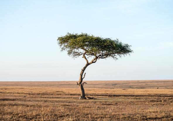 Viaje a África de Cuarto de Maravillas