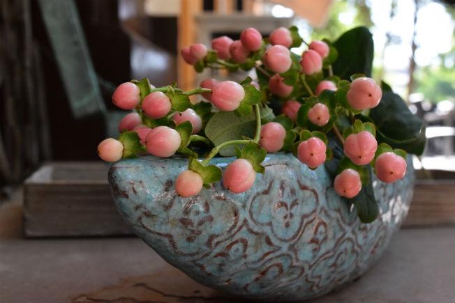 Hipericum para ramos de novia. Foto: Rocío Ponce