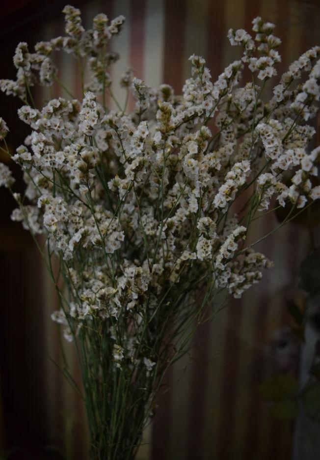 Limonium para ramos de novia. Foto: Rocío Ponce