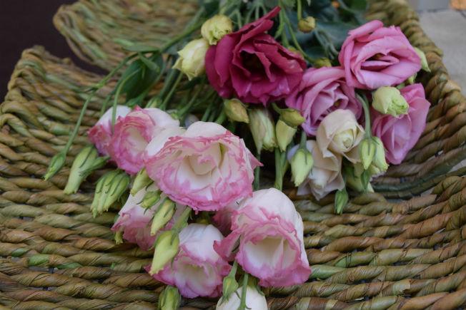 Lisianthus para ramos de novia. Foto: Rocío Ponce