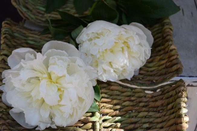 Peonías para ramos de novia. Foto: Rocío Ponce