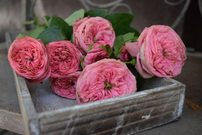 Rosas inglesas para ramos de novia. Foto: Rocío Ponce