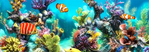 Superior Van And Mobility >> Sim Aquarium 3D: el placer de tener un acuario en el